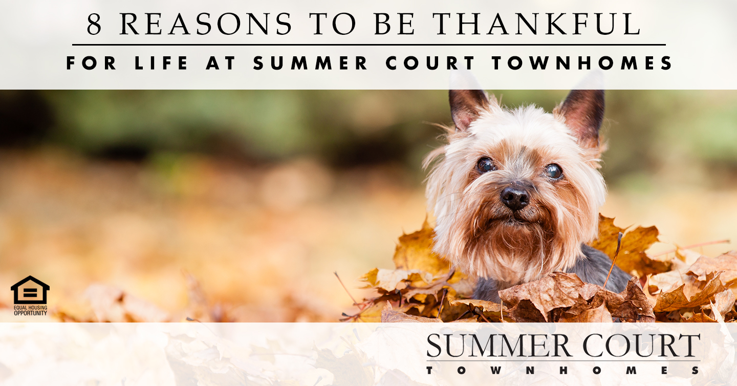 reasons to be thankful for life at Summer Court Townhomes