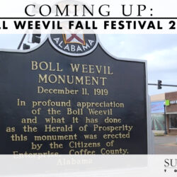 Boll Weevil Fall Festival 2020